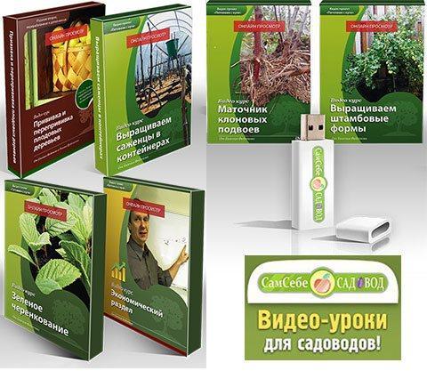 Советы садовода по открытию питомника с нуля