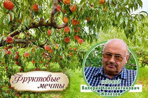 Сайт Валерия Константиновича Железова