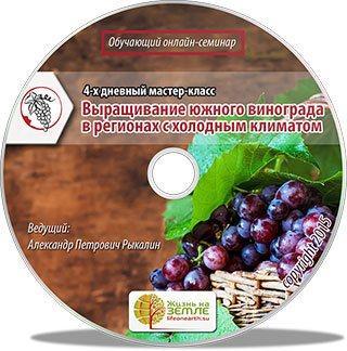 Выращивание винограда в регионах с холодным климатом